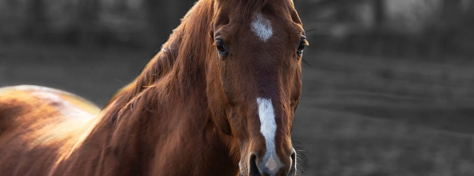 Pferd, © MoHo-Art.de / www.pixelio.de