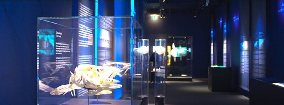 """Ausstellung """"Der Ozean der Zukunft"""", © Zoologischen Museum"""
