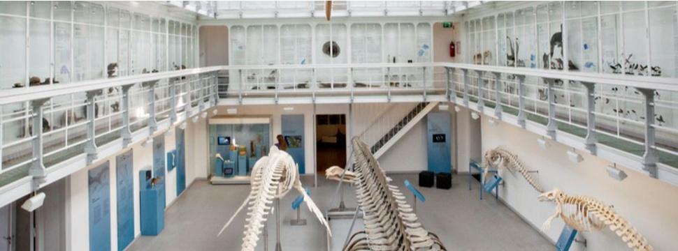 Zoologisches Museum der Christian-Albrechts-Universität zu Kiel, Pressefoto