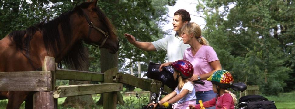 Familie trifft Pferd auf Radausflug, © Ostsee-Holstein-Tourismus e.V.