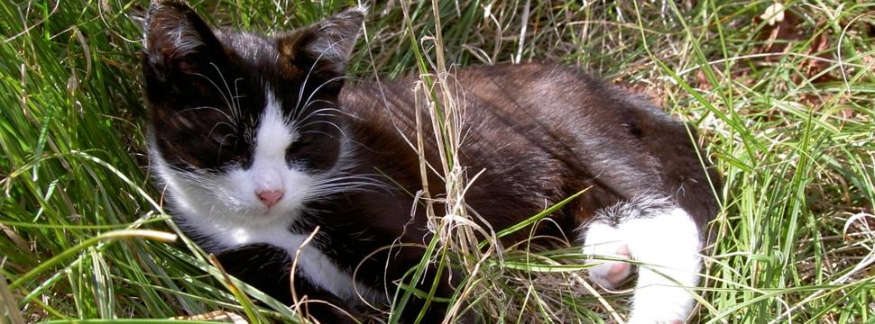 Katze, © kiel-magazin.de